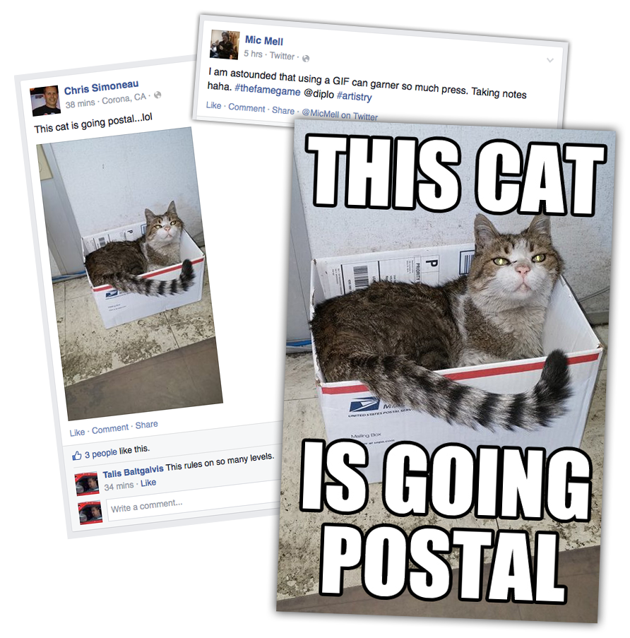 This cat is going postal